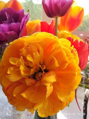 Наступила долгожданная весенняя пора. Раскрыли солнышку свои объятия тюльпаны! фото 24