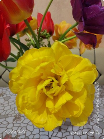 Наступила долгожданная весенняя пора. Раскрыли солнышку свои объятия тюльпаны! фото 23