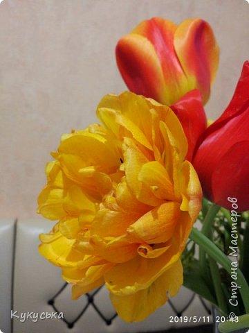 Наступила долгожданная весенняя пора. Раскрыли солнышку свои объятия тюльпаны! фото 25