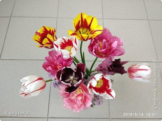 Наступила долгожданная весенняя пора. Раскрыли солнышку свои объятия тюльпаны! фото 27
