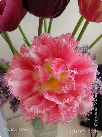 Наступила долгожданная весенняя пора. Раскрыли солнышку свои объятия тюльпаны! фото 10