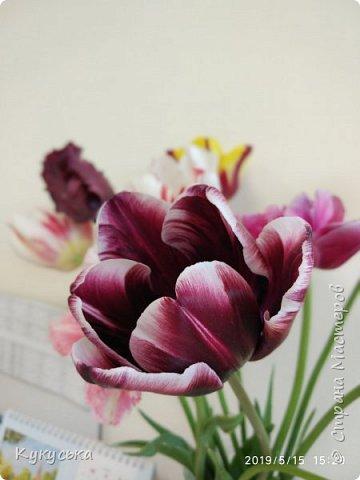 Наступила долгожданная весенняя пора. Раскрыли солнышку свои объятия тюльпаны! фото 7