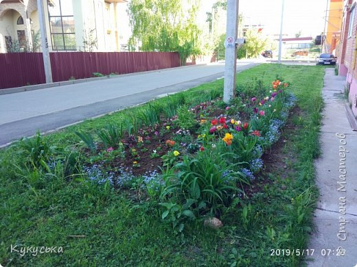 Наступила долгожданная весенняя пора. Раскрыли солнышку свои объятия тюльпаны! фото 5
