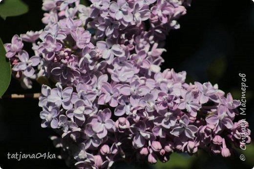 Полагаю,что тут комментарии совершенно не нужны,,,нужно просто наслаждаться весной,,пением птиц,солнышком и красотой фото 7