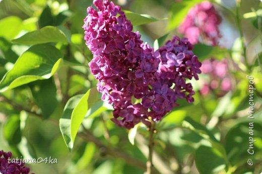 Полагаю,что тут комментарии совершенно не нужны,,,нужно просто наслаждаться весной,,пением птиц,солнышком и красотой фото 8