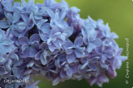 Полагаю,что тут комментарии совершенно не нужны,,,нужно просто наслаждаться весной,,пением птиц,солнышком и красотой фото 9