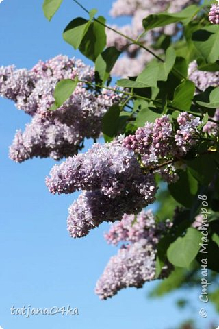 Полагаю,что тут комментарии совершенно не нужны,,,нужно просто наслаждаться весной,,пением птиц,солнышком и красотой фото 12