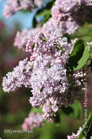 Полагаю,что тут комментарии совершенно не нужны,,,нужно просто наслаждаться весной,,пением птиц,солнышком и красотой фото 15