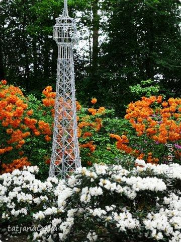 Эта поездка полностью изменила моё представление о таком кустарнике как рододендрон,,я всегда думала что это растение всего 1 метр высотой,,,а оказывается такое чууудо  дерево,,,,,,,Пока мы гуляли и наслаждались цвететние ,мы  встретили свадебные пары,массу людей которые просто фотографировались ,на фоне такой красоты,,, фото 22