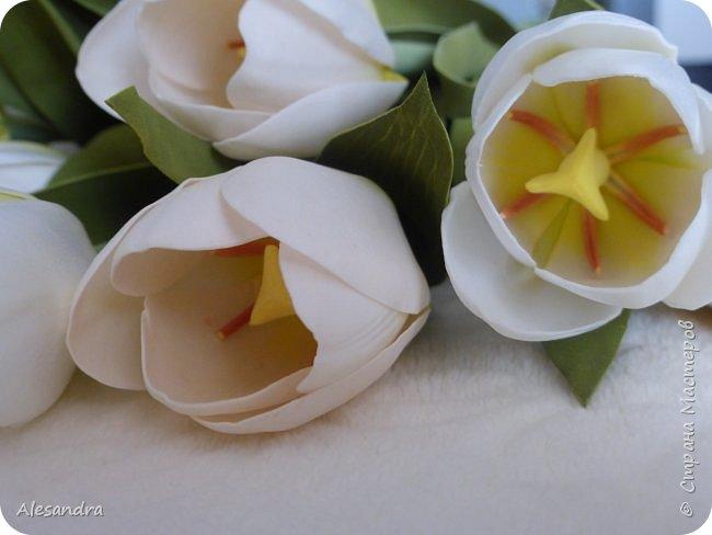 Тюльпаны для Анны фото 6