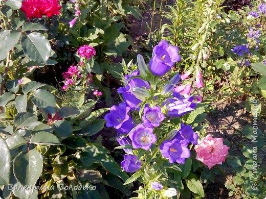 Добрый день мастера и мастерицы!!!Очередная попытка отразить в глине трепетную красоту роз!!! фото 10