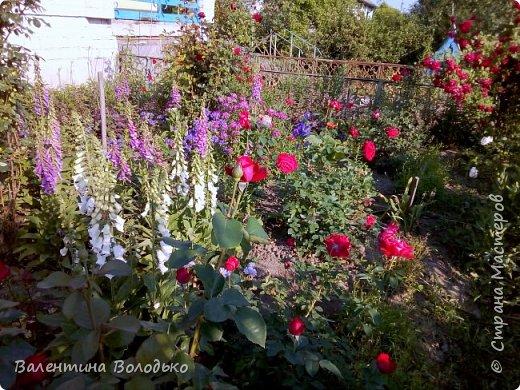 Добрый день мастера и мастерицы!!!Очередная попытка отразить в глине трепетную красоту роз!!! фото 9