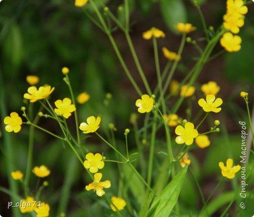 Здравствуйте! Продолжаю собирать фото цветов,лета и хорошего настроения! Если понравится и вам - буду рада)