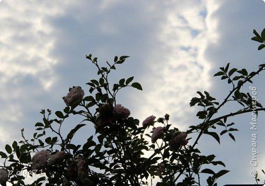 Здравствуйте,дорогие мои!! Что может быть прекрасней и интересней,чем природа?!! Цветы,небо,птицы,животные-так увлекательно за этим наблюдать!))