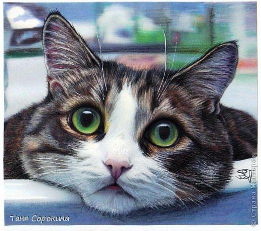 Дорогие кошатники, поздравляю вас с Международным Днём кошек! Чуть не прозевала такой особенный праздник))). У меня сейчас двое этих чудесных животных: кошечка Афина и кот Семён. Но я решила не показывать фотографии своих любимцев, а напомнить вам мои кошачьи портреты в сухой пастели.  фото 1