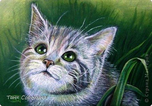 Дорогие кошатники, поздравляю вас с Международным Днём кошек! Чуть не прозевала такой особенный праздник))). У меня сейчас двое этих чудесных животных: кошечка Афина и кот Семён. Но я решила не показывать фотографии своих любимцев, а напомнить вам мои кошачьи портреты в сухой пастели.  фото 2