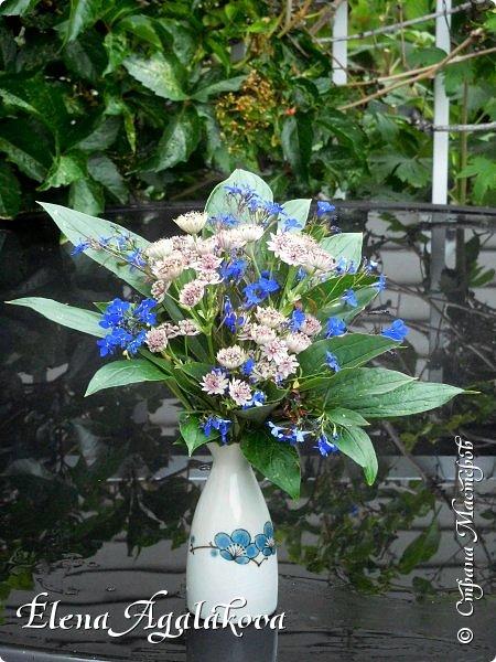 Добрый день! Сегодня я к вам снова с композициями из цветов. На этот раз много простых, полевых цветов... Я их обожаю за нежность и очарование! Прошлым летом я решила осуществить еще одну свою мечту - научится цветочному дизайну. Очень люблю цветы, травки-муравки, деревья и вообще все растения. Очень увлекательно работать с цветами! Я взяла небольшой курс по цветочному дизайну. Дома делаю аранжировки из того что под рукой, беру цветы которые найду, даже полевые и из своего садика. Люблю использовать разные веточки, травинки... Делюсь красотой!   фото 7