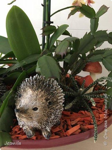 С помощью растений: герани, суккуленты, плющ (хедера) выросла корзинка фото 5
