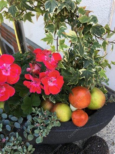 С помощью растений: герани, суккуленты, плющ (хедера) выросла корзинка фото 3