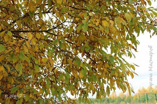 Здравствуйте!!! Время летит!!!... Только что мы наслаждались теплом,солнцем,цветами.. а вот уже и Осень хозяйничает! Начались дожди,даже первый снег успел уже кого-то порадовать,а кого-то напугать) Но не стоит хандрить,ведь жизнь прекрасна в любом её проявлении!