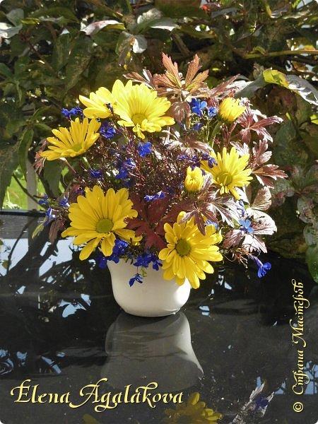 Добрый день! Сегодня я к вам снова с композициями из цветов. На этот раз много осенних композиций желто-оранжево-красных...  Вот уже больше года я занимаюсь цветочным дизайном. Очень люблю цветы, травки-муравки, деревья и вообще все растения. Очень увлекательно работать с цветами! Я взяла небольшой курс по цветочному дизайну. Дома делаю аранжировки из того что под рукой, беру цветы которые найду, даже полевые и из своего садика. Люблю использовать разные веточки, травинки... Некоторые оранжировки из цветочного магазина где я работаю. Делюсь красотой! фото 2