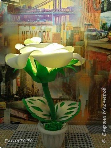ростовые цветы фото 4
