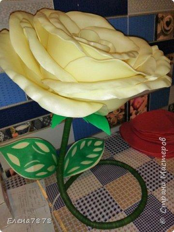 ростовые цветы фото 3