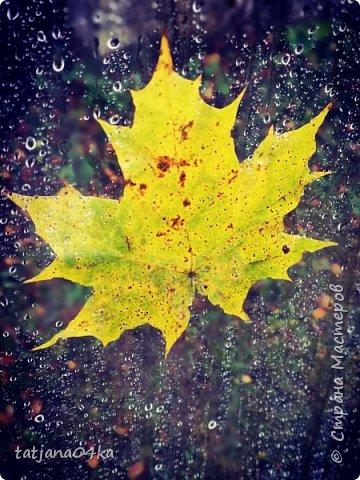 Приводила в порядок парник,а на улице  штормило и лил проливной дождь,,,лист прилип к стеклу ,,,И получилась матрица,,,очень интересная картинка