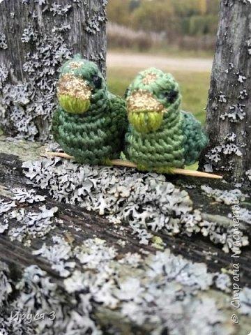 Навязала попугайчиков ...  фото 11