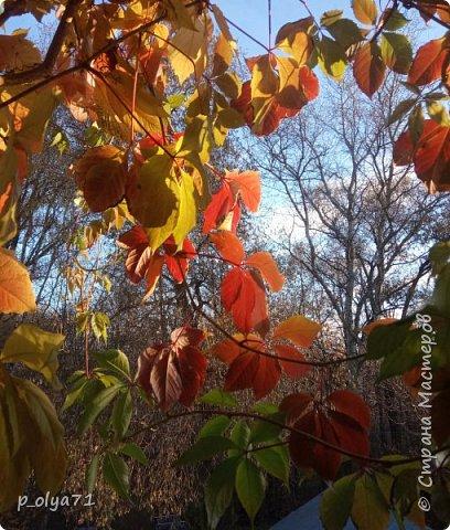 Здравствуйте,здравствуйте!!! Я не пропала))) Накопила(не специально!!)) фото октября-ноября,только на днях нашла время их разобрать и показать вам!)