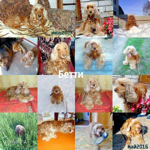 Здравствуйте,мои дорогие!!  В память о нашей любимой Бетти этот пост!
