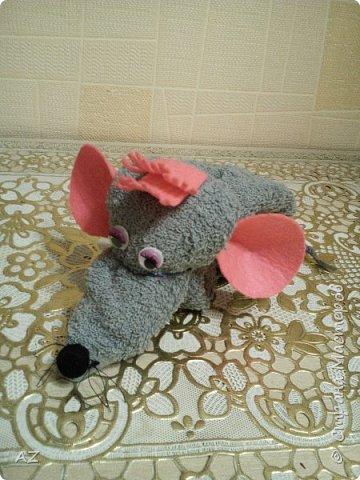 мыши фото 1