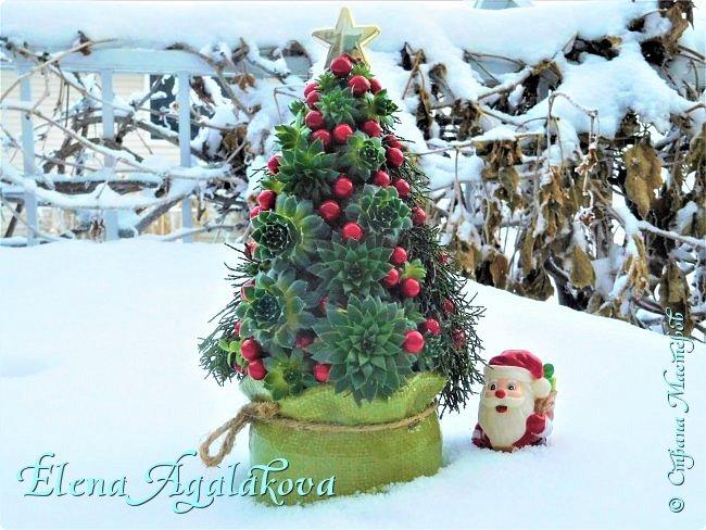 Добрый день! С наступающим Новым годом и Рождеством! Сегодня я к вам снова с композициями из живых цветов, на этот раз новогодними. Желаю в этот зимний день Тепла и Света, без затей... Пусть жизнь наполненной рекой течет счастливей и мудрей! Благополучия, Любви и новых творческих идей! фото 4