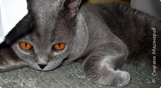Котик Найс фото 3
