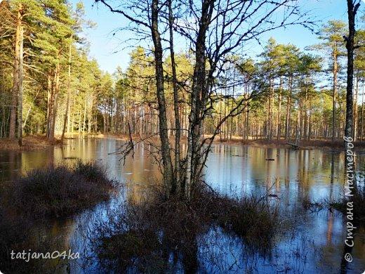 поход на болото,,,оставляет какое то смутное чувство,,вроде что там можно увидеть кроме квакающих лягушек,,,,но ,,как там красиво,,