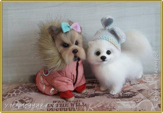 Войлочная игрушка: Собачка из шерсти .Шпиц УМКА фото 4