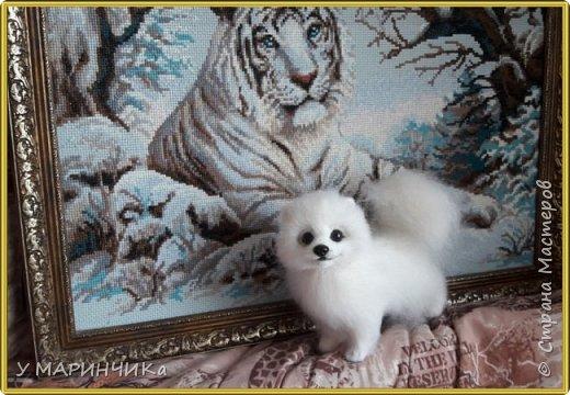 Войлочная игрушка: Собачка из шерсти .Шпиц УМКА фото 3
