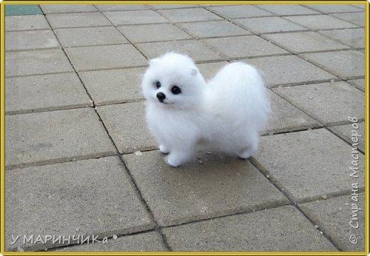 Войлочная игрушка: Собачка из шерсти .Шпиц УМКА фото 2