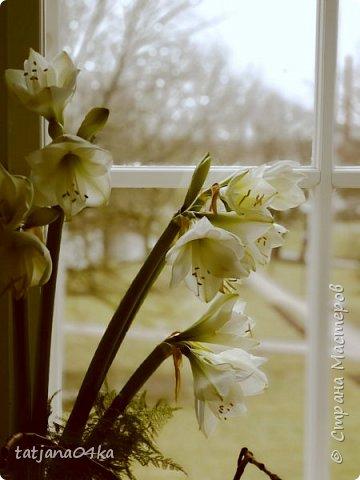 я никогда не скрываю,что фотографии ,которые делаю всегда обрабатываю,,,сырой материал хорош только тогда,когда фотографируешь природу,ландшафт,,,А цветы очень хочется обработать и создать что то интересное,,, фото 2