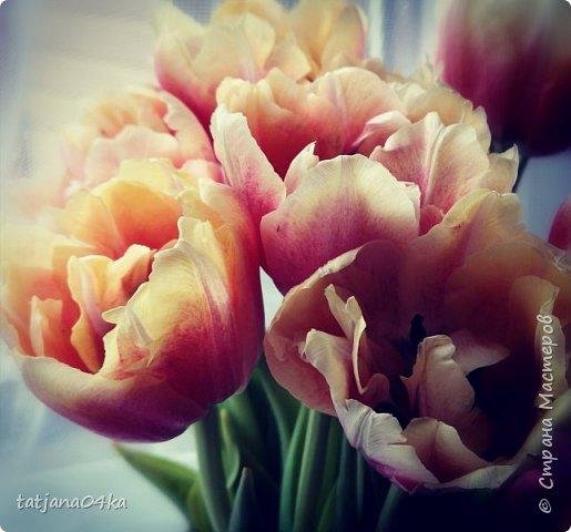 я никогда не скрываю,что фотографии ,которые делаю всегда обрабатываю,,,сырой материал хорош только тогда,когда фотографируешь природу,ландшафт,,,А цветы очень хочется обработать и создать что то интересное,,, фото 1