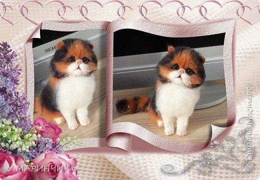Котенок и шерсти фото 2
