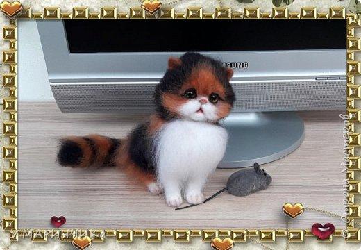 Котенок и шерсти фото 3