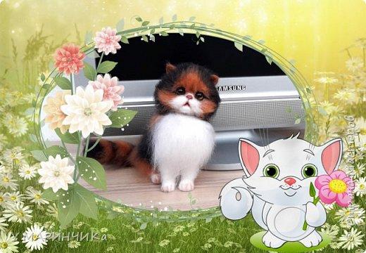 Котенок и шерсти фото 4