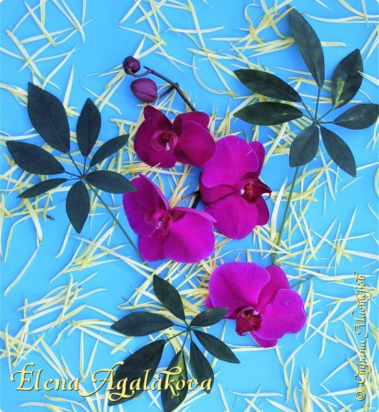 Добрый день! У нас в Калгари в этом году весна вступает в свои права очень медленно... поэтому особенно хочется цветов и красок! Я уже третий год занимаюсь цветочным дизайном. Очень люблю цветы, травки-муравки, деревья и вообще все растения. Очень увлекательно работать с цветами! Дома делаю оранжировки из того что под рукой, беру цветы которые найду, даже полевые и из своего садика. Начали появляться первые цветы в моем садике, чему я очень рада, поэтому в композициях можно увидеть и медуницу и примулы и даже пролески...  разные веточки, травинки... использую в основном цветы из цветочного магазина где работаю. Делюсь красотой!   фото 23
