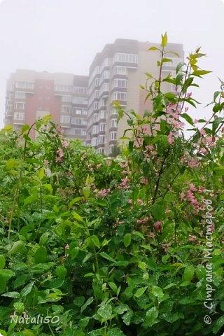 Доброго всем дня! Лето началось с дождей и тепла совсем нет..  Захотелось поделиться своими впечатлениями.. Дождь тоже имеет свои прелести.. Приглашаю на прогулку после ливня..  фото 3