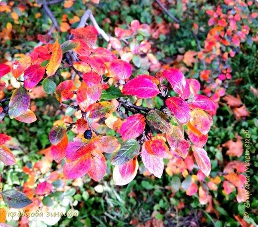 КРАСОТА ВОКРУГ НАШЕГО ПРУДА  Листья осенние кружат... Нежит мне сердце любовь! Все чувства с душою, дружат И сколько пурпурных цветов?  Чувства, что в сердце надолго Биеньем своим кружит в такт... То, что под сердцем, так звонко Не отречься от них, это факт.  Любовью пронзила нас осень Деревья нам дарят цветы!.. Ещё и ещё счастья просим Чтоб в реаль, воплотить бы мечты  Как волнителен мир разноцветья Где прохлада с теплом кореша!.. Этот цикл, происходит столетья Всё с любовью встречает душа.  Осень нежит, ласкает и манит В круговерть всех чарующих дней Она другом в любви, людям станет Нет желанней её и милей.  Виктор Варкентин    фото 10