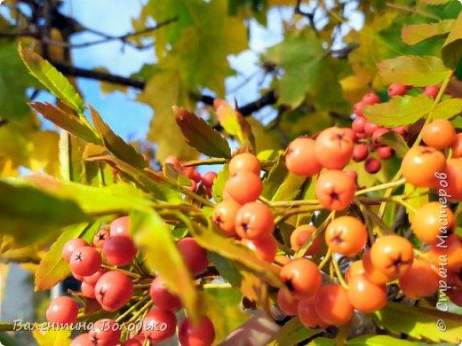 Добрый день мастера и мастерицы!!!Хочется вас порадовать яркими ягодками рябины!!Думаю многим понравится такой букет на фоне снега за окошком.Что то у меня в последнее время в основном ягоды лепятся. фото 3