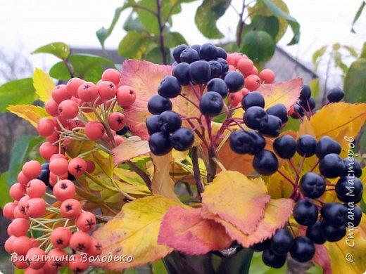 Добрый день мастера и мастерицы!!!Хочется вас порадовать яркими ягодками рябины!!Думаю многим понравится такой букет на фоне снега за окошком.Что то у меня в последнее время в основном ягоды лепятся. фото 1