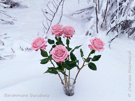 Добрый вечер мастера и мастерицы!!!Сегодня у меня розы.Вчера днем шел дождь,а ночь метель,вот и  фотографировала розы  в снегу. фото 2