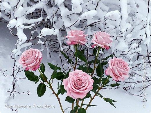 Добрый вечер мастера и мастерицы!!!Сегодня у меня розы.Вчера днем шел дождь,а ночь метель,вот и  фотографировала розы  в снегу. фото 4